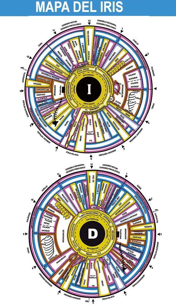 iridología-horiz